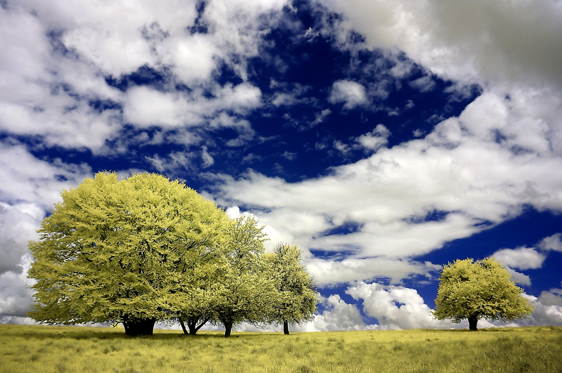 greenery-infrared-photography1.jpg