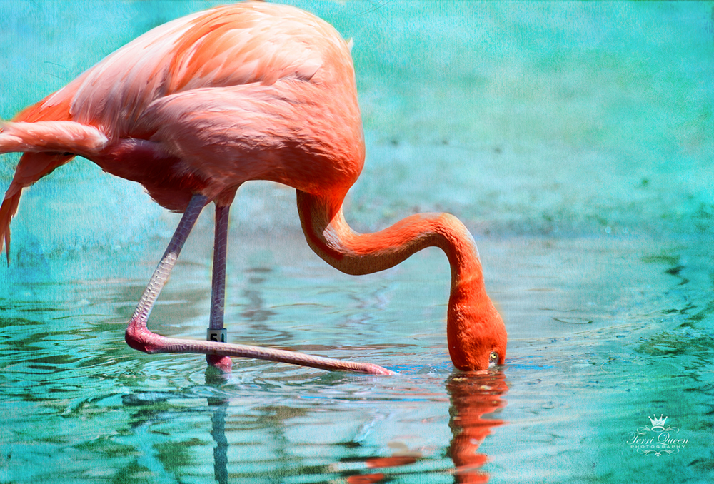 Flamingos-3305-719.jpg