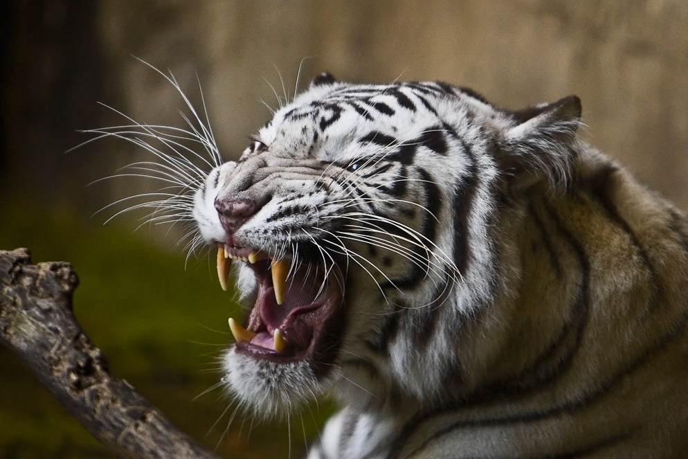Fort_Worth_Tigers-358.jpg