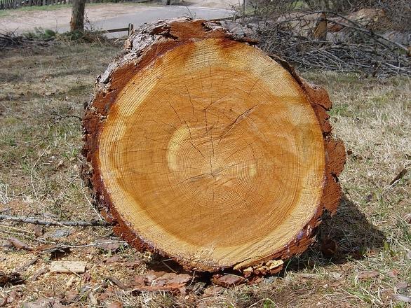 Outer Sapwood Inner Heartwood