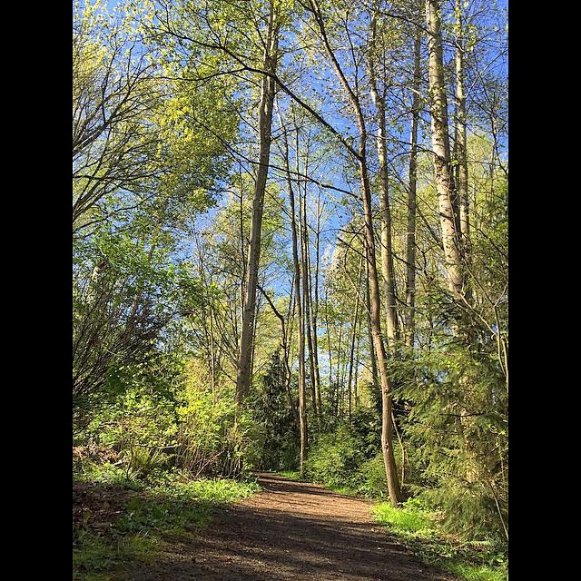 Longfellow Creek Trail.jpg