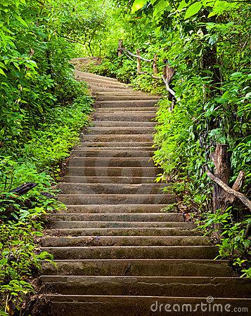 stairway through vegetation.jpg