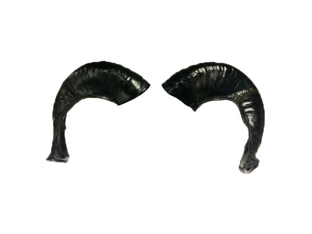 Goat Horns.jpg