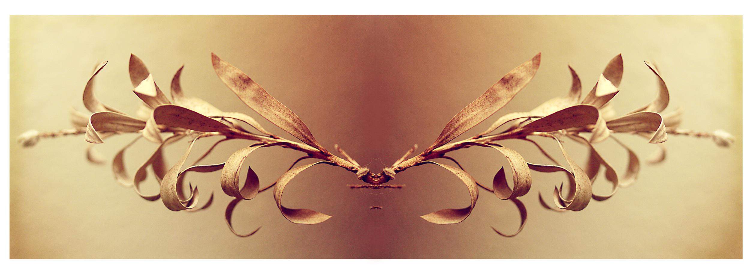 bottle brush leaf symmetry.jpg