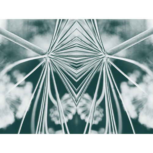 fennel abstract teal s.jpg