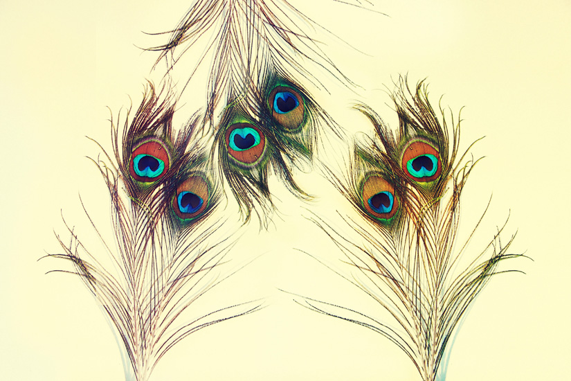 peacock feathers yellow x 3 edit s.jpg