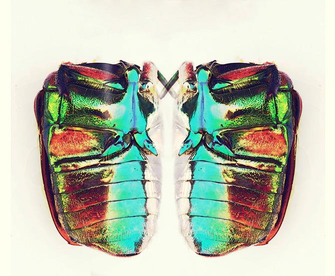 beetle mirror 2 poster s.jpg
