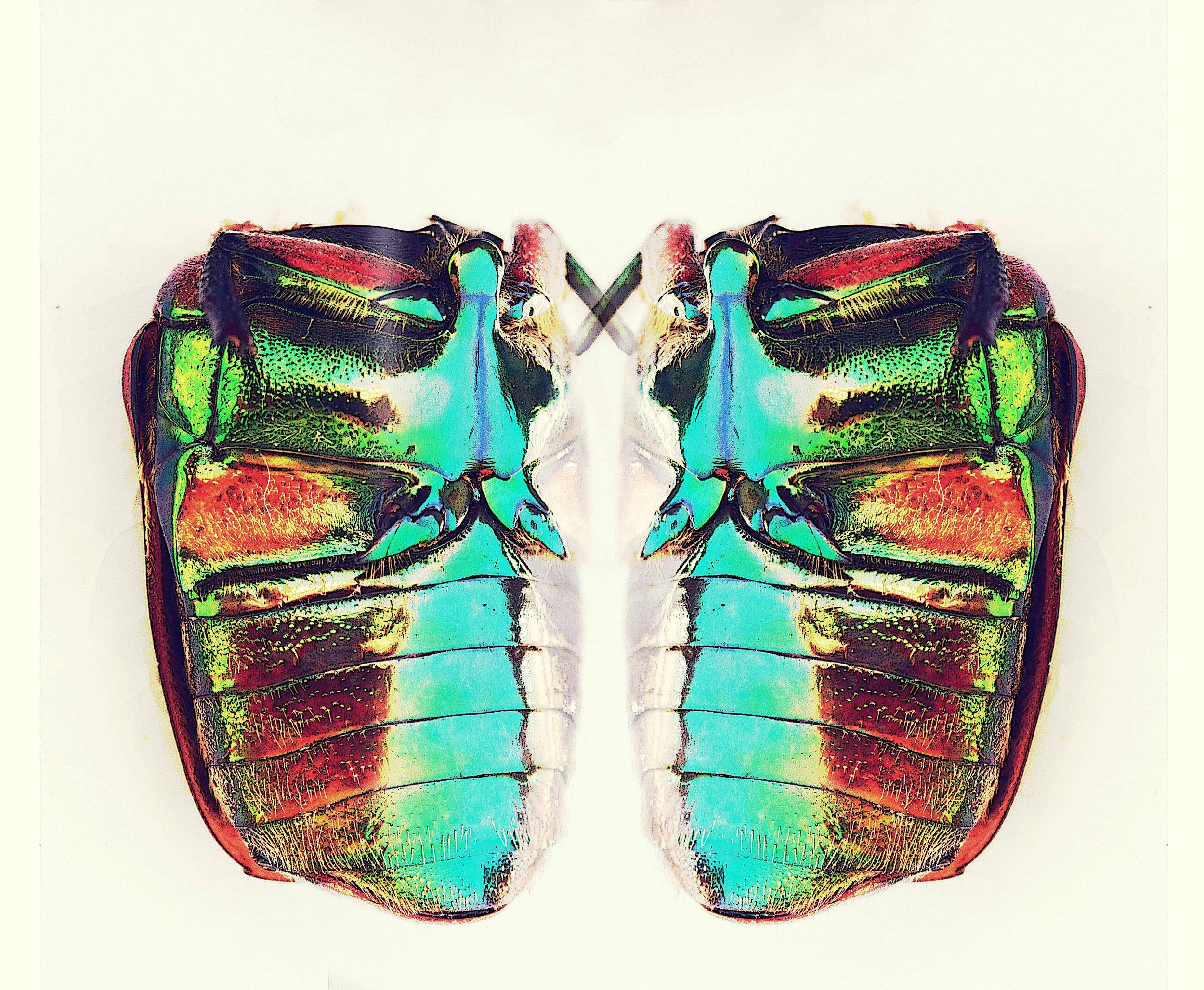 beetle mirror 2 poster.jpg