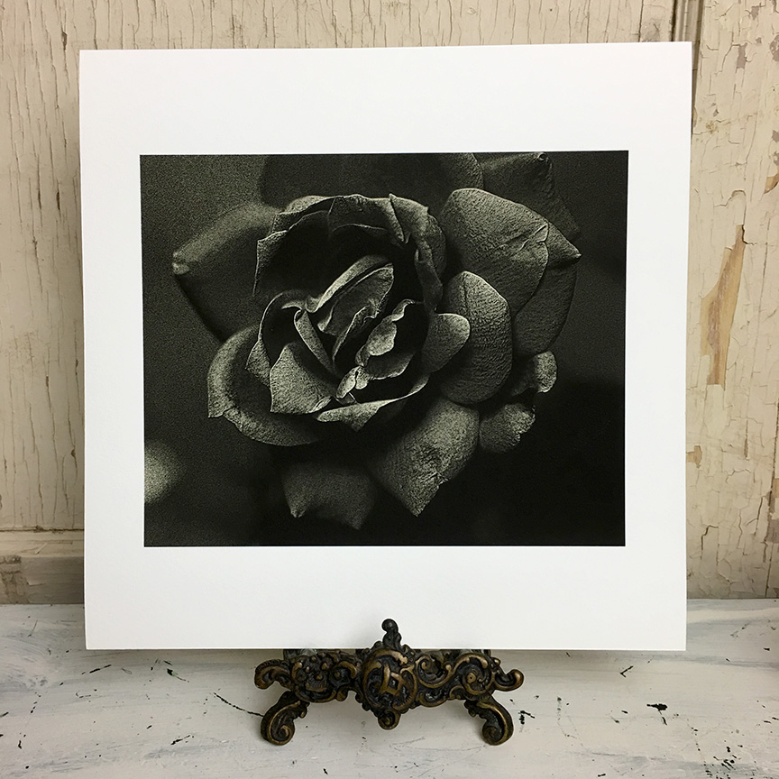 rose fine art photography print monotone.jpg