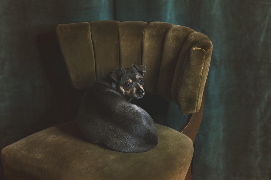 Molly in chair dec 2017 s.jpg