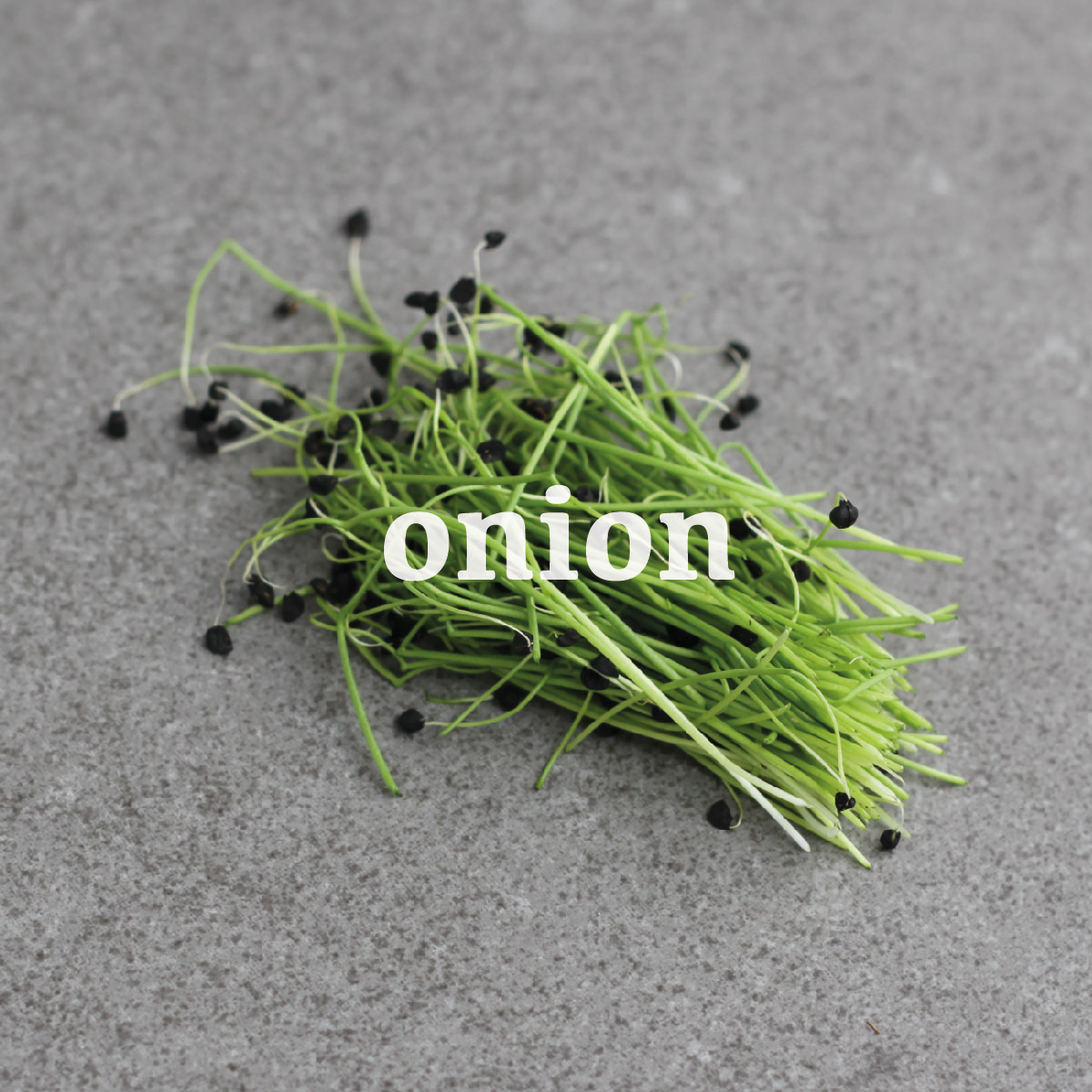 _onion-01.jpg