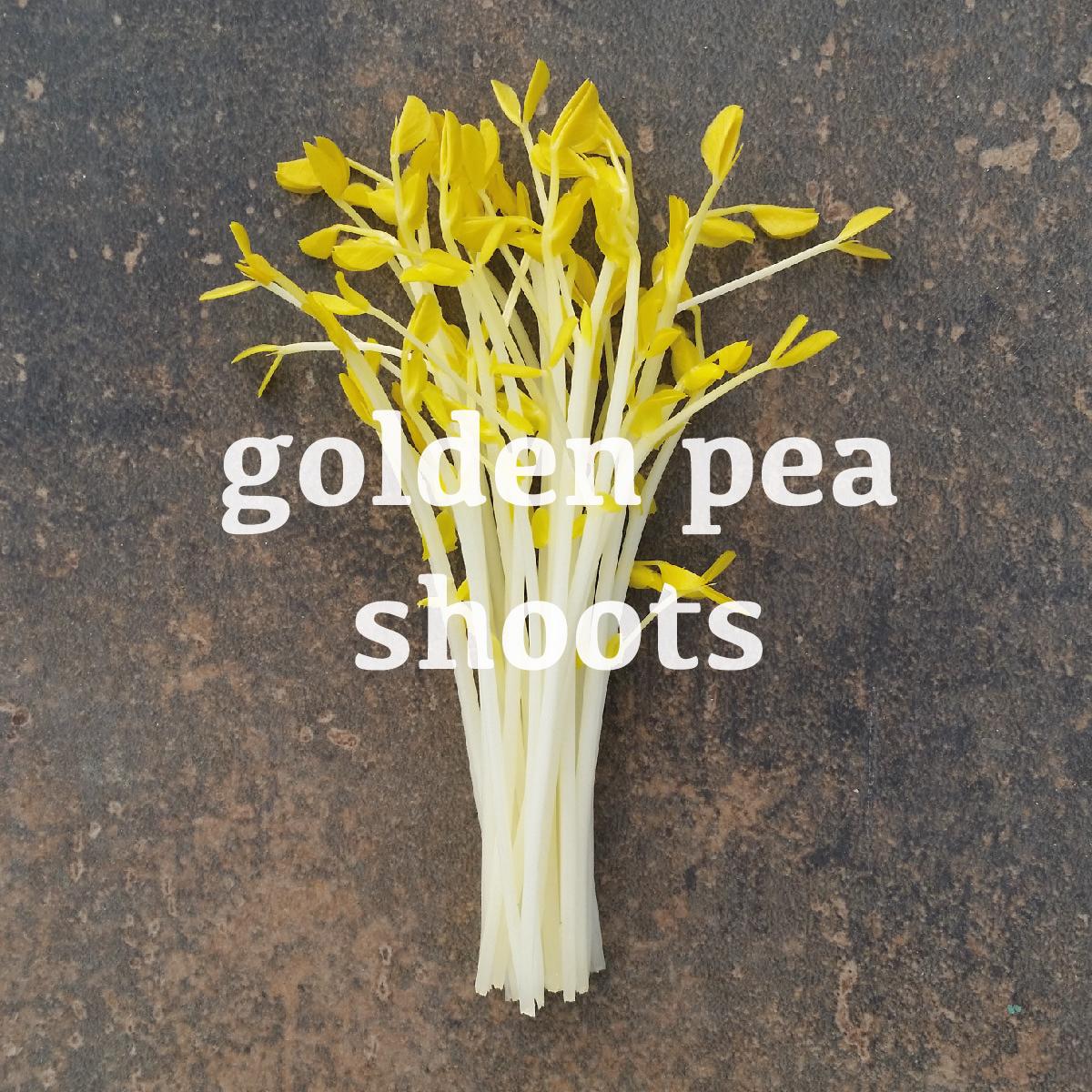 golden-pea.jpg
