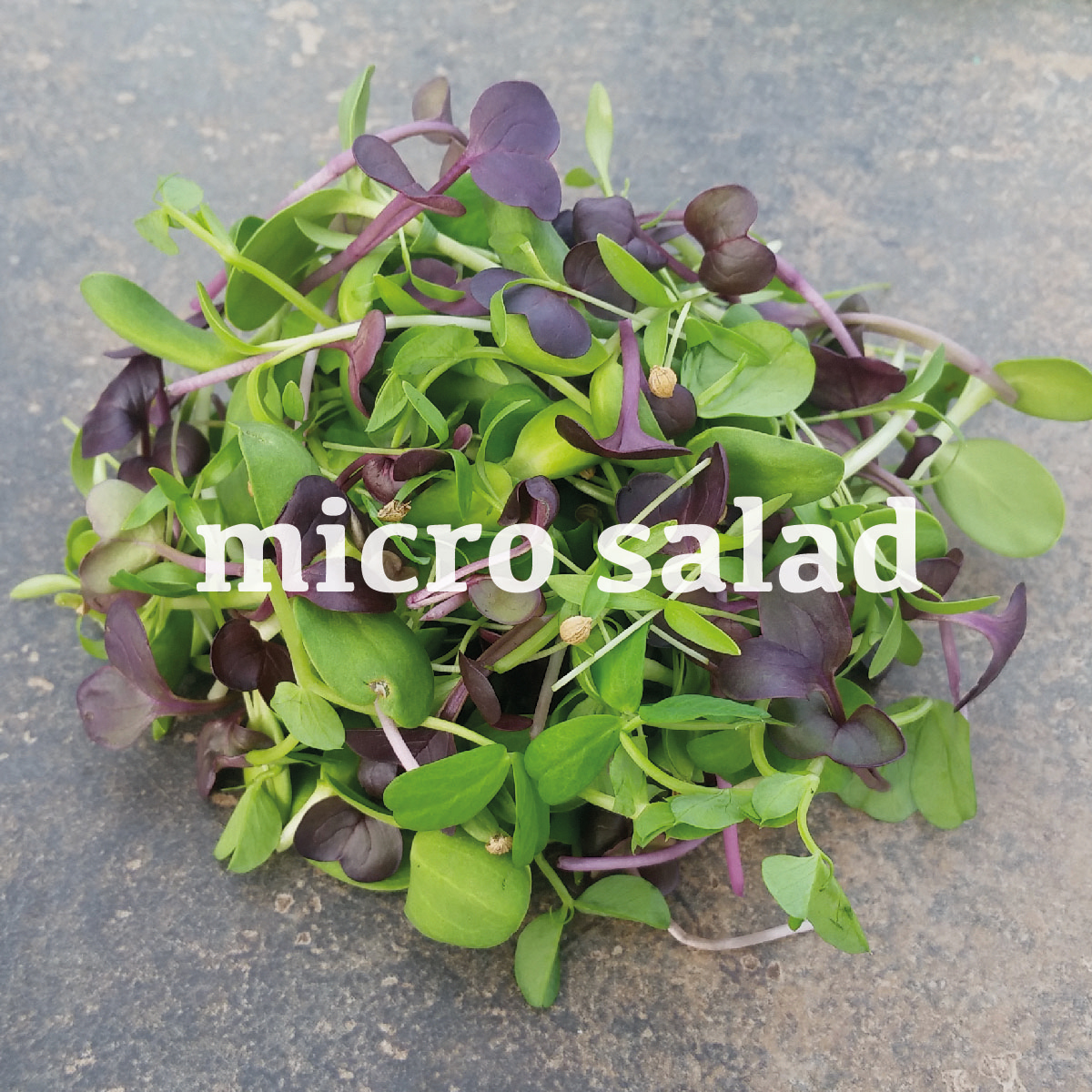 micro-salad.jpg