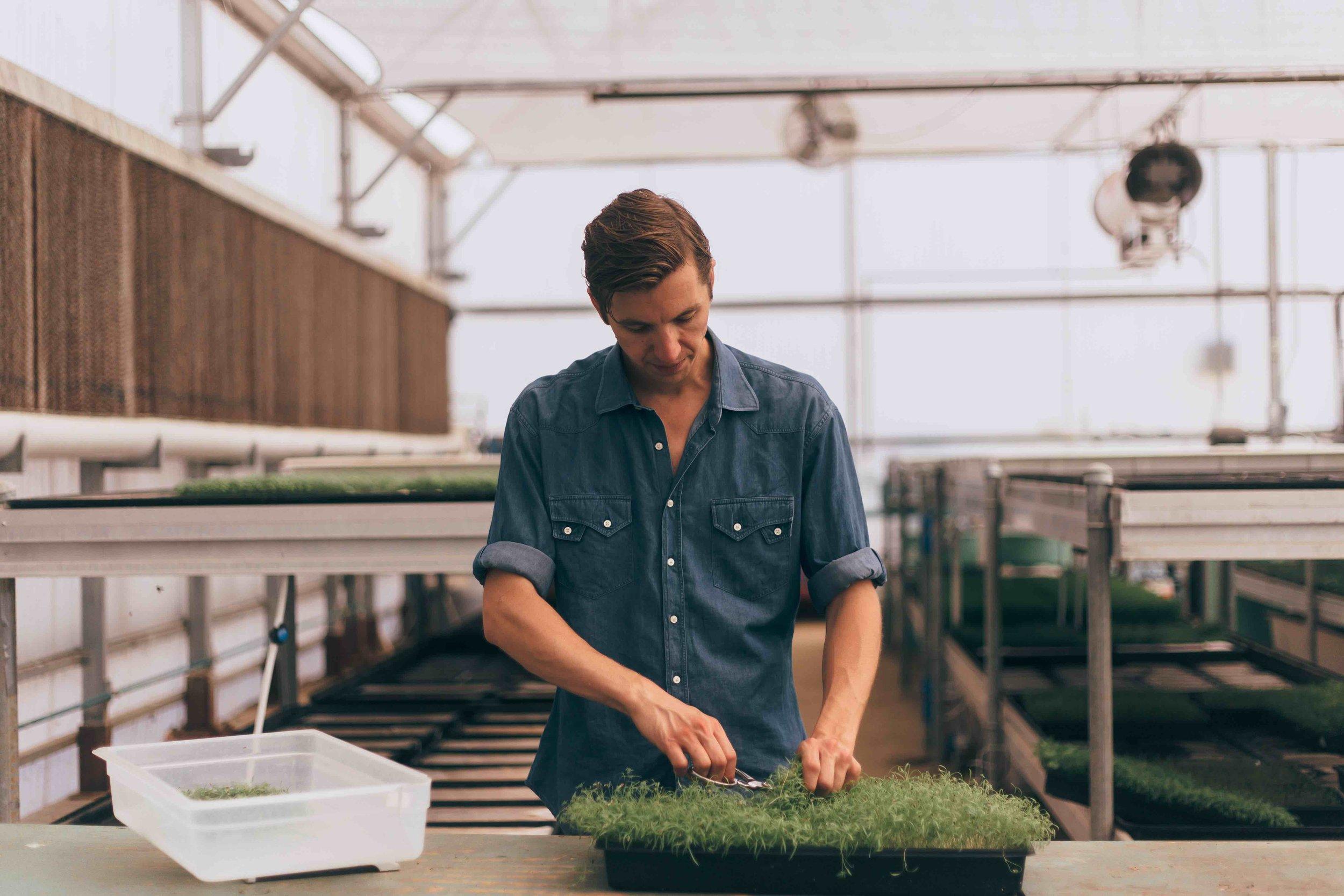 David in greenhouse.jpg