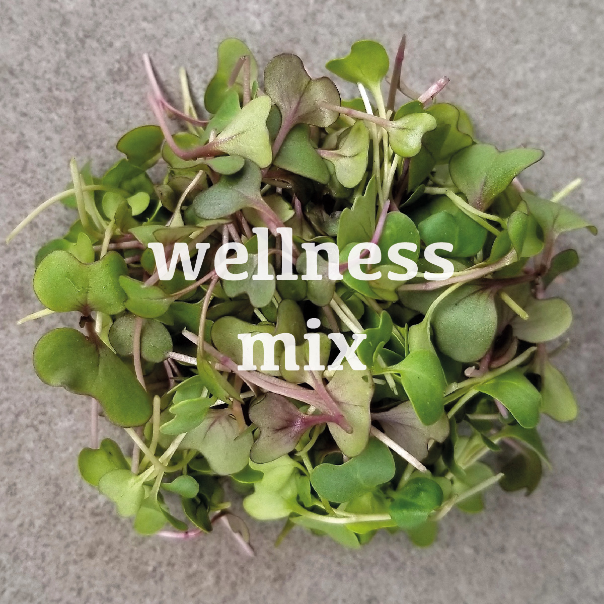 wellness mix web.jpg