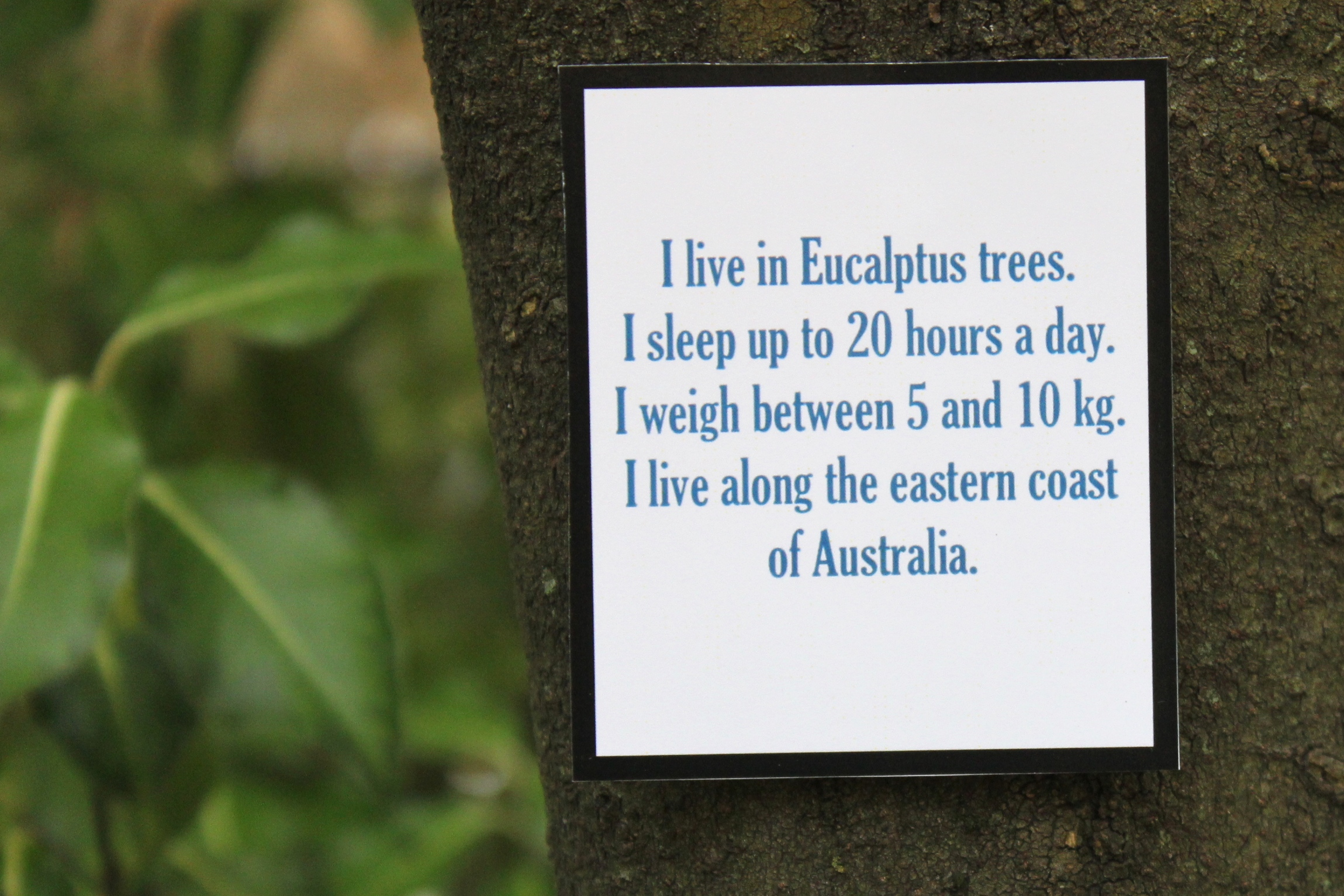 Australian Animals Scavenger Hunt Fact Cards