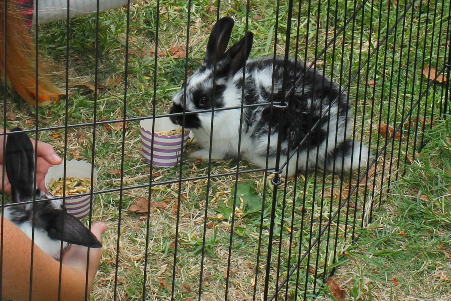 Bunny Party - Bunny Feeding