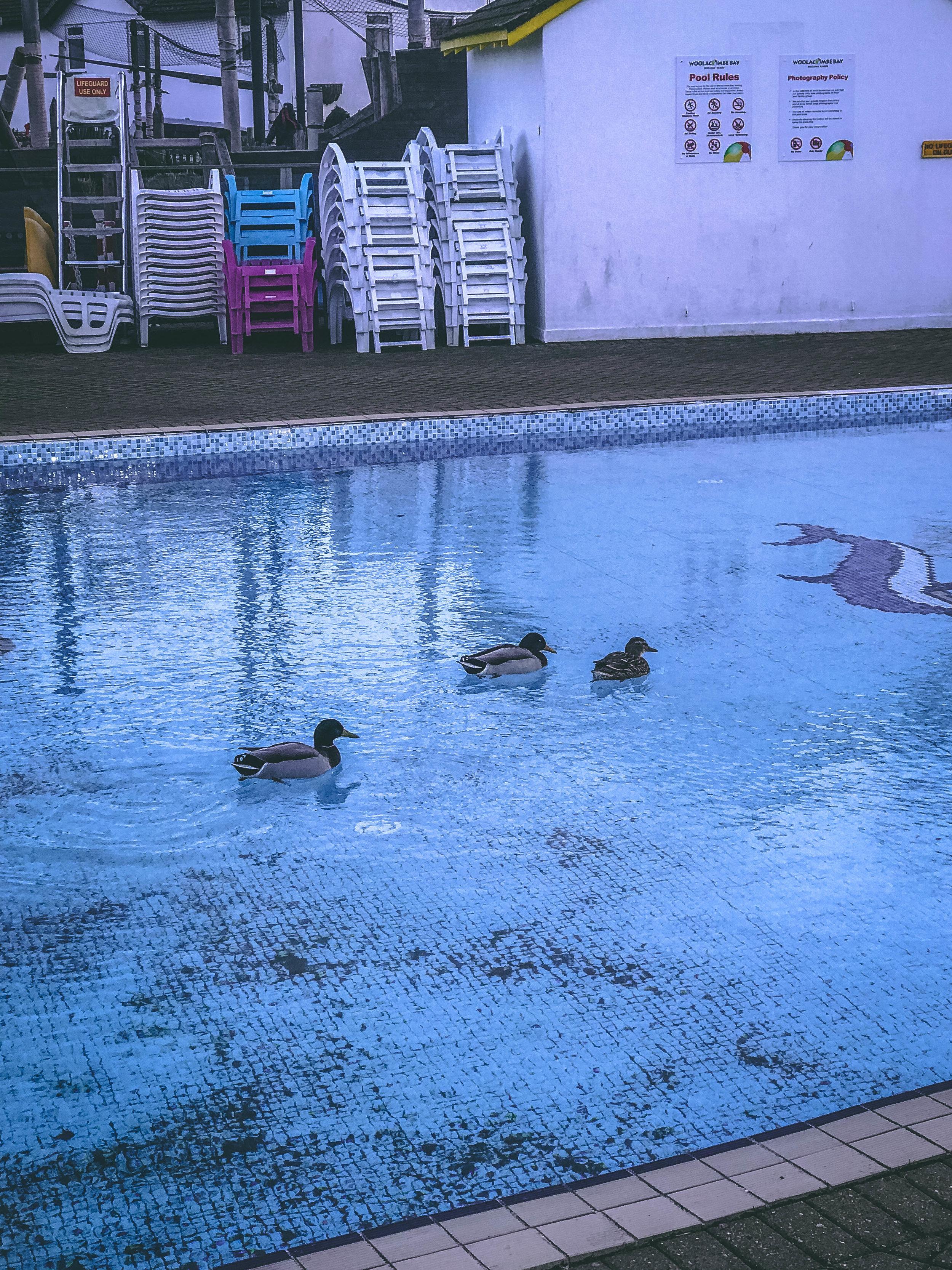 Ducks Woolacombe-2.jpg