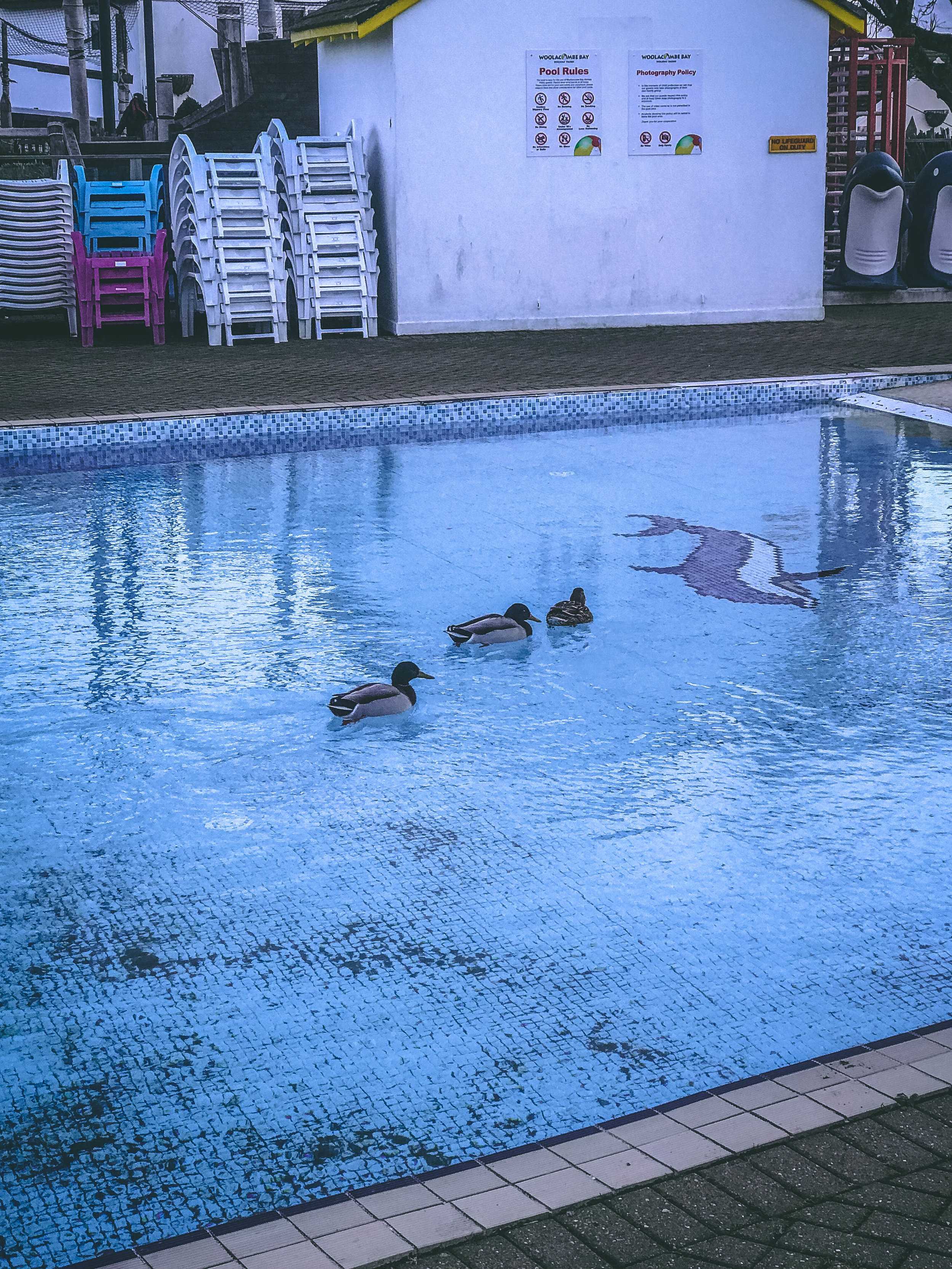 Ducks Woolacombe.jpg