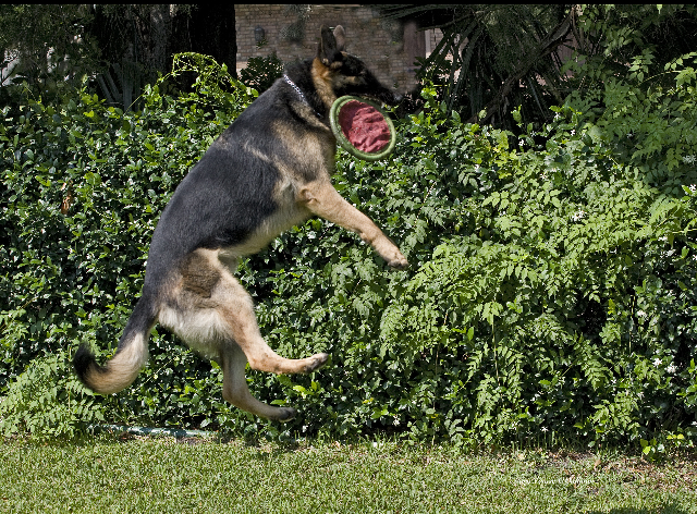 Alpha Jumping for Frisbee.jpg