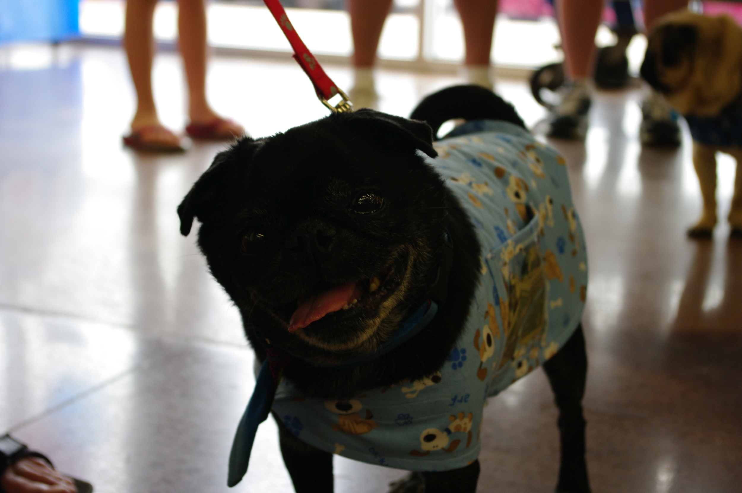PUGSLEY # 6 - ADOPTED JUNE 2014