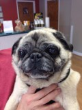 PUGSLEY # 57 - ADOPTED AUGUST 2015