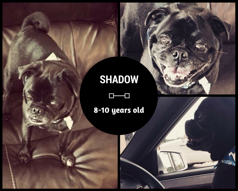 SHADOW # 70 - ADOPTED SEPTEMBER 2015