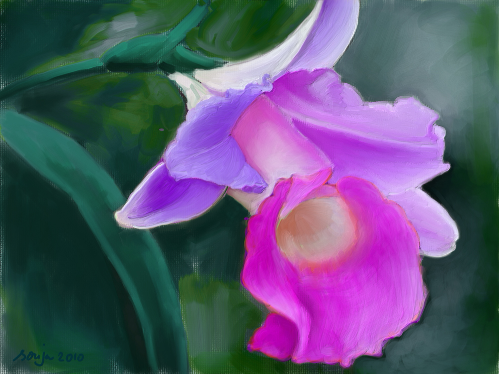 pink-orchid.jpg