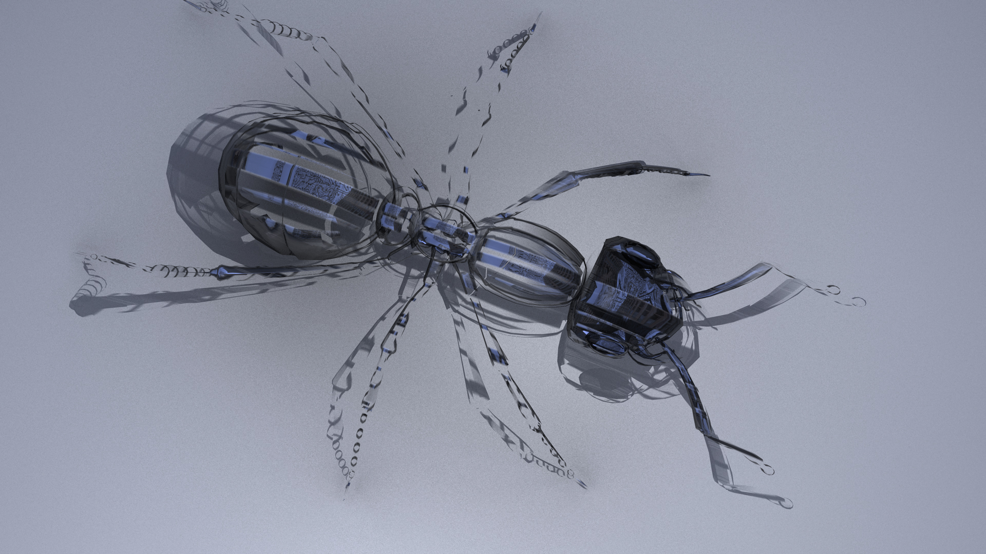 Ant 1.jpg