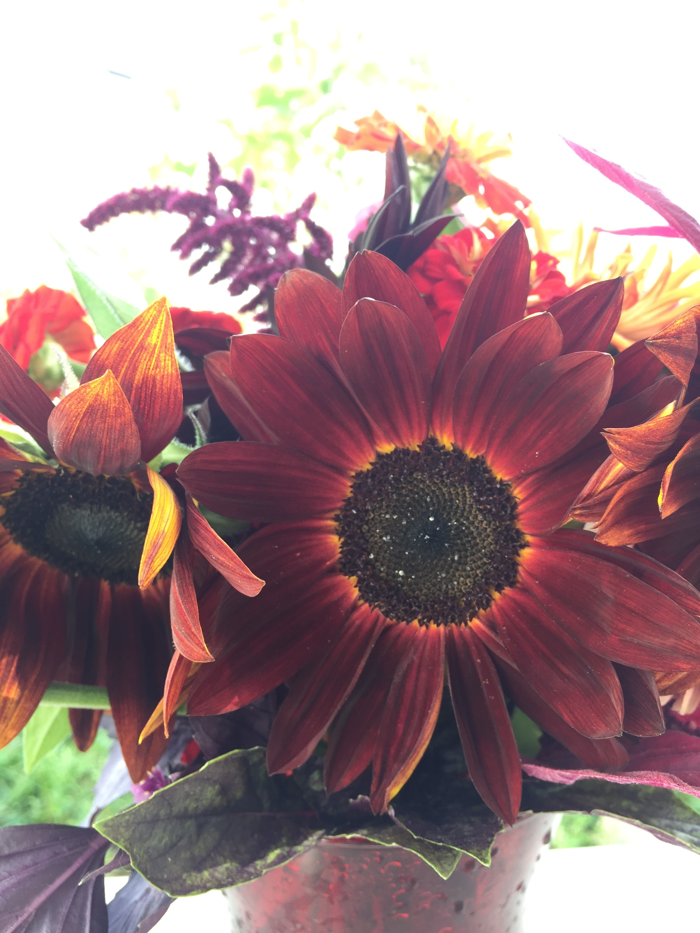 The deepest brown sunflowers are best enjoyed in person - even with a flash we can't really catch that glow!