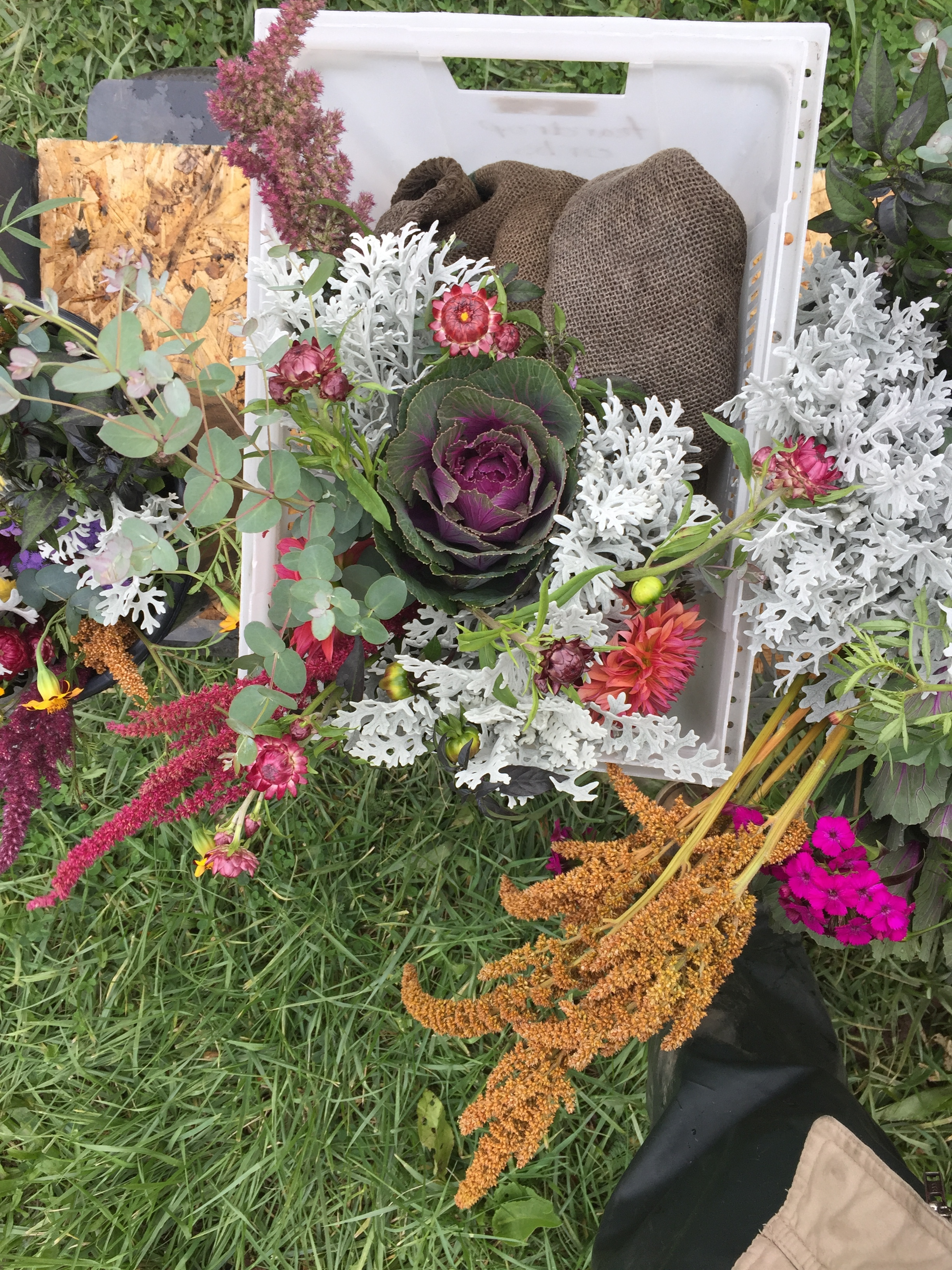 Amaranth, dianthus, dahlias, marigolds, dusty miller, strawflowers, kale, and eucalyptus make up our last week's deliveries.
