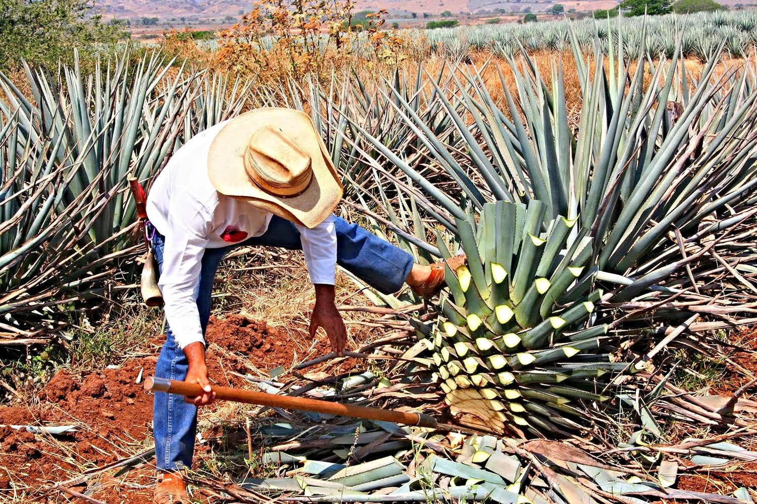 Mexico+-+Tequila+(14).JPG