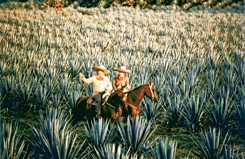 Tequila-Plantio-de-Agave-y-Charros.jpg