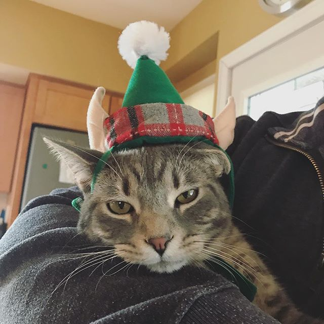Grayson is so happy to be celebrating his first Christmas with the Rand Fam! #MerryChristmas #elfkitty