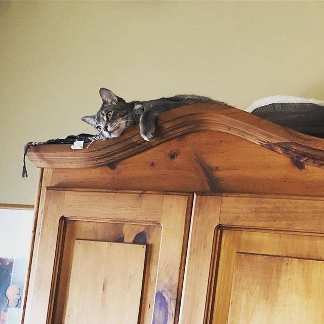 Favorite kitty hangout
