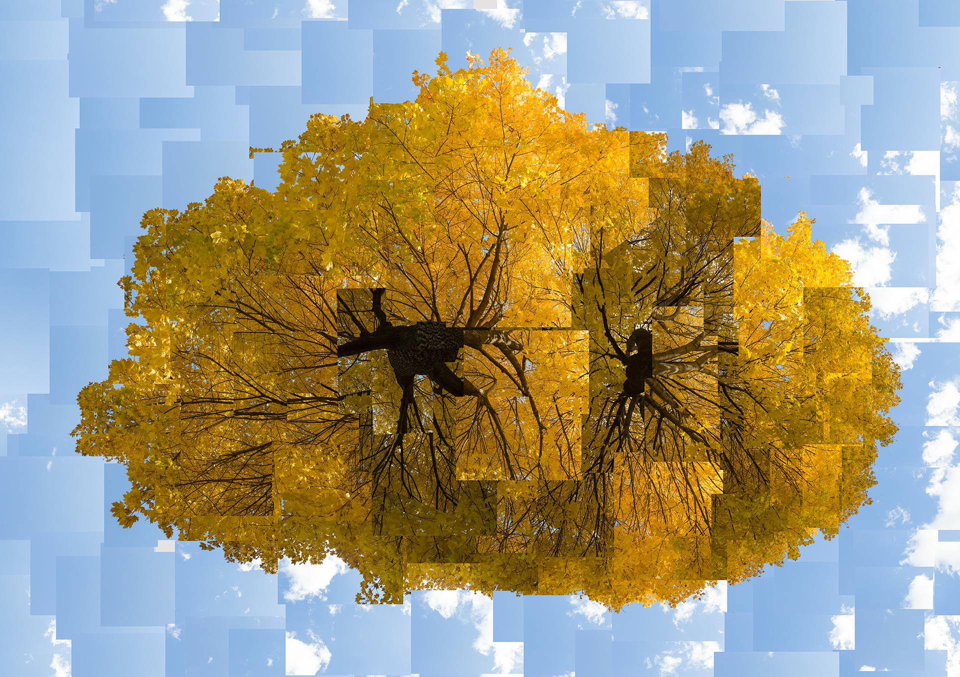 Double Yellow Tree