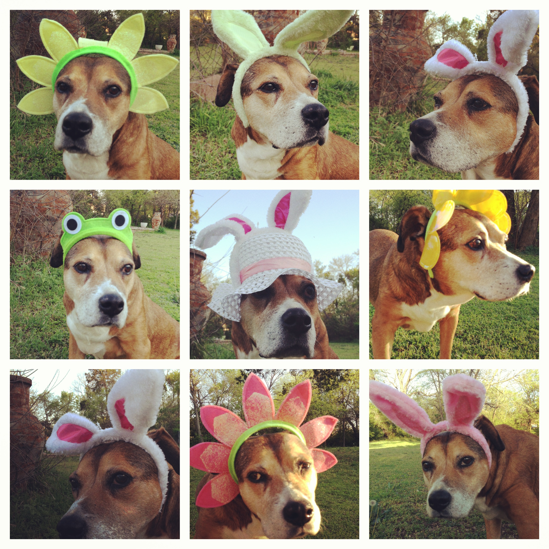 Daisy Easter 13 24.JPG