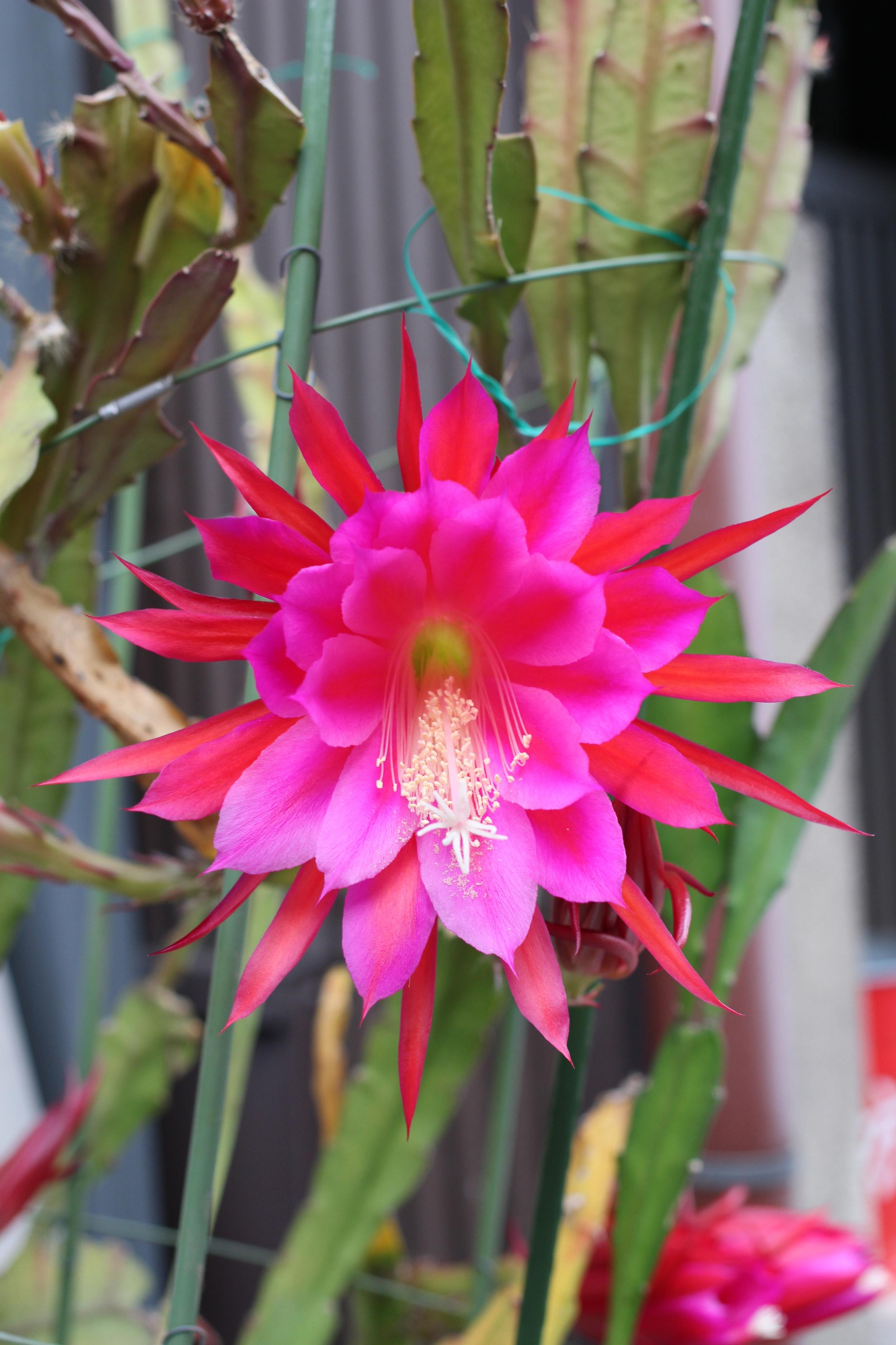 kyotoflower.jpg