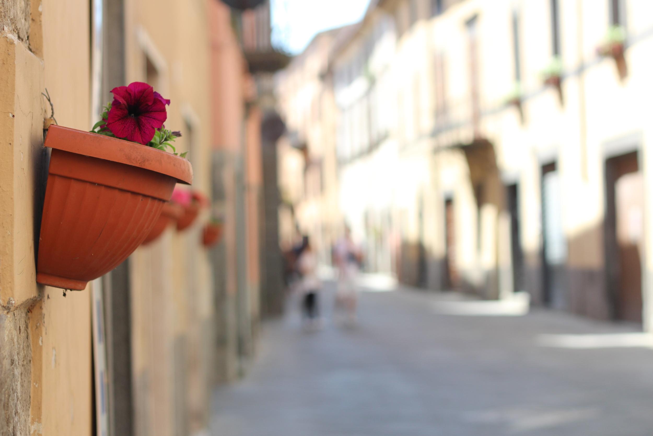 orvieto_flowers