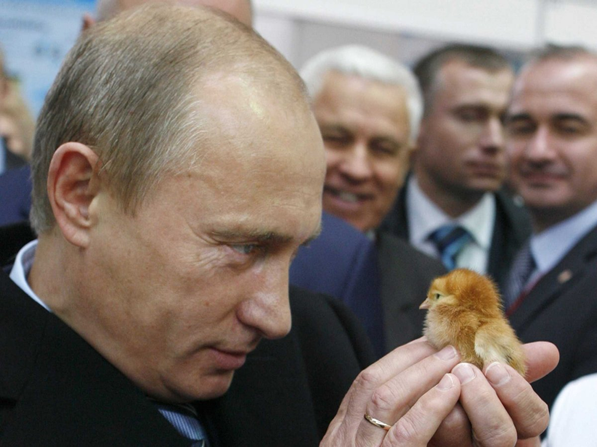 putin-stares-down-a-young-chick-at-an-agricultural-exposition.jpg