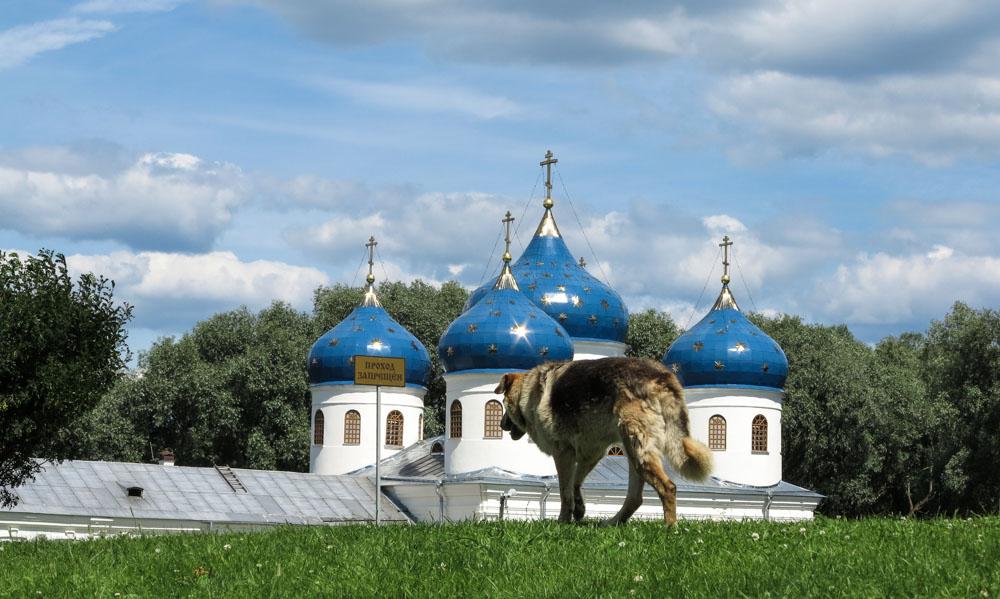 Novgorod zwerfhond Joerjev klooster