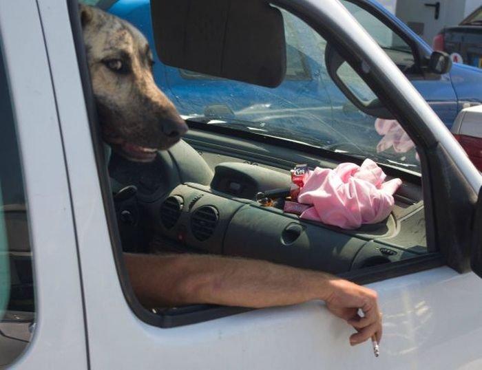 dogsmoking.jpg