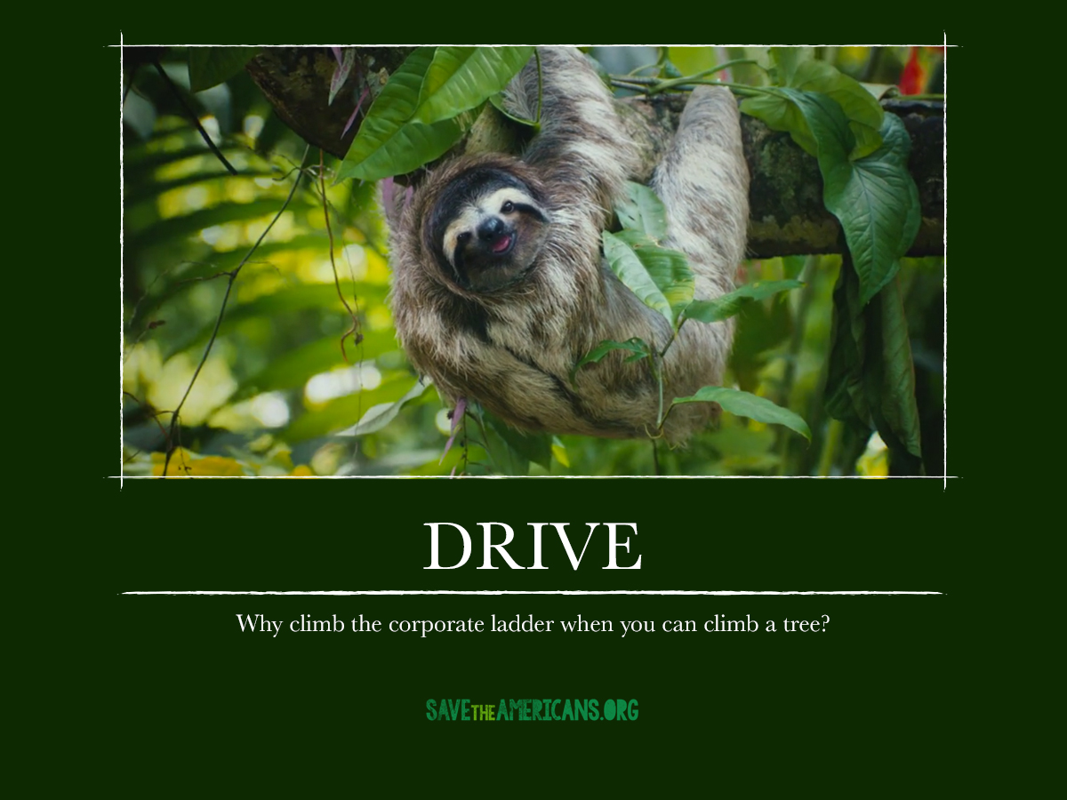 CR_STA_DemotivationalPosters_drive.jpg