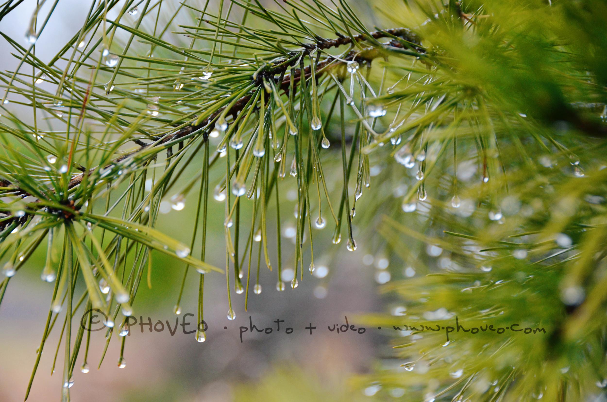 WM_Waterdrops.jpg
