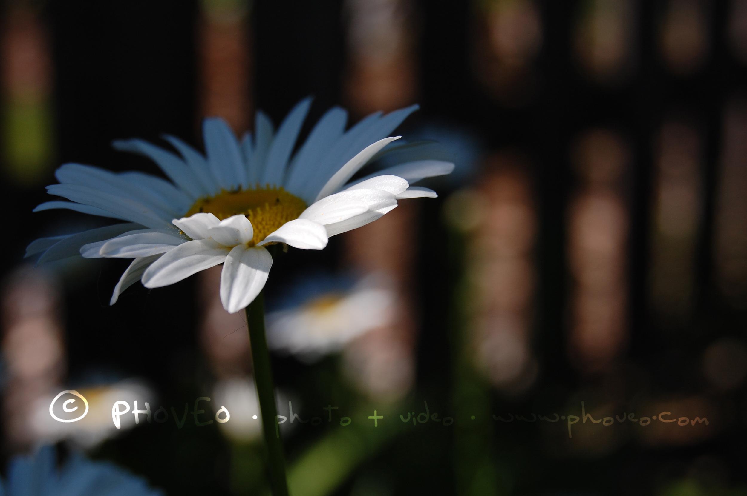 WM_DSC_0520.jpg