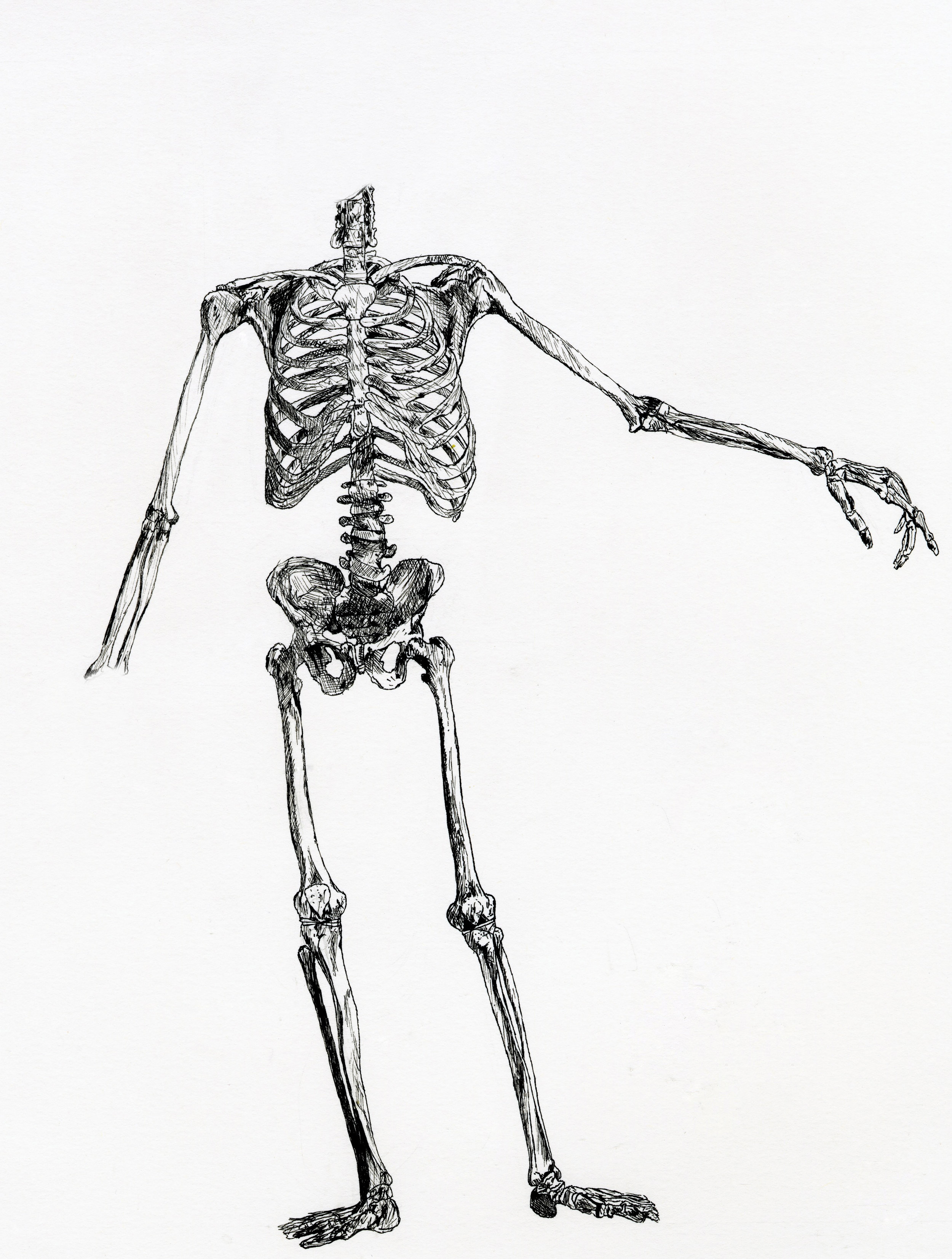 Skeleton drawing (2008)