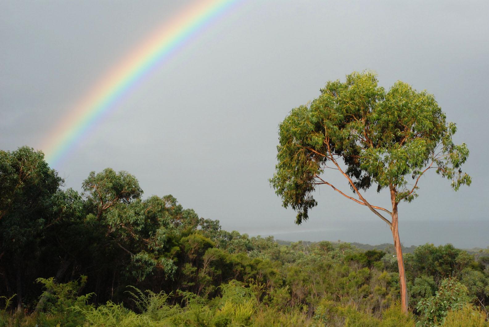 Roadknight rainbow.jpg