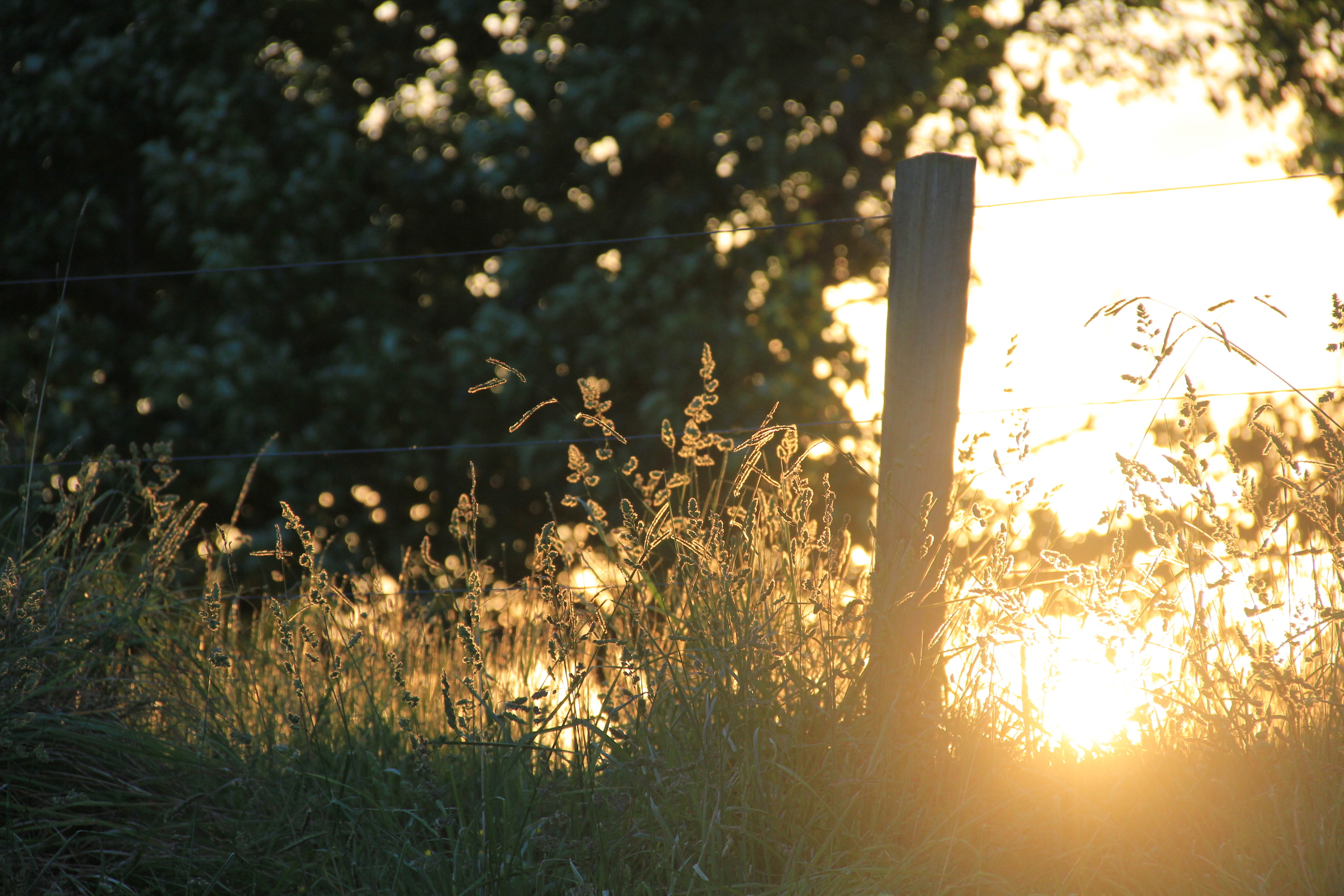 255:365 2-12-13 Bachside sundown
