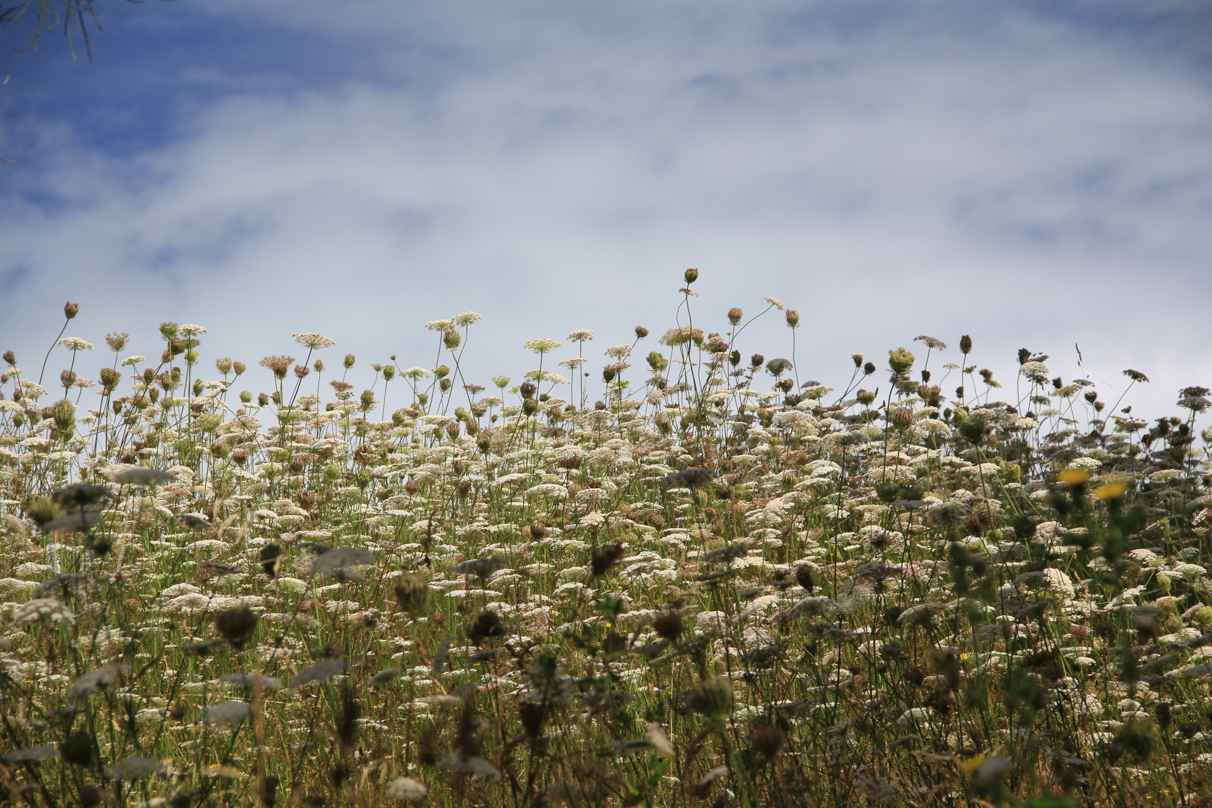 308:365 24-1-14 Summer Fields