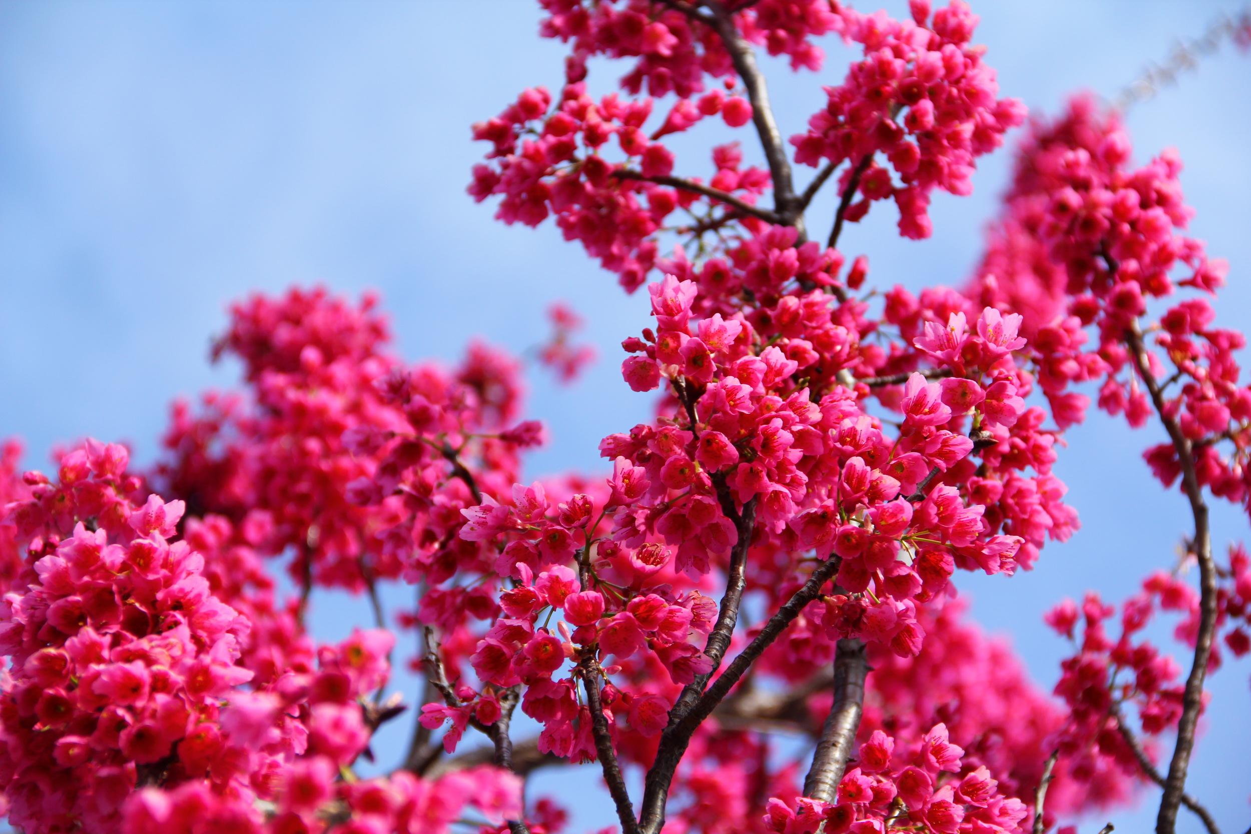 167:365 4-9-14 Blossom
